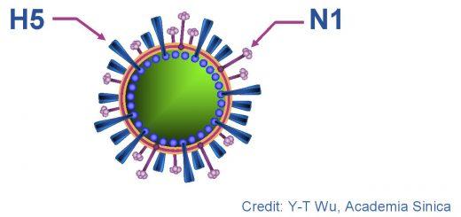 Bệnh H5N1 ở gia cầm