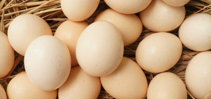 mầm bệnh xâm nhập vào quả trứng